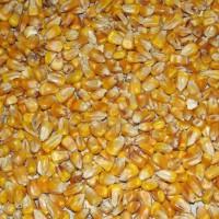 Maïs Entier au Kg